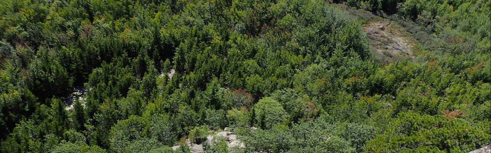 The Beehive, Maine - Hiking  tree outdoor forest plant nature landscape conifer wooded spruce evergreen balsam fir wood lush area hillside surrounded