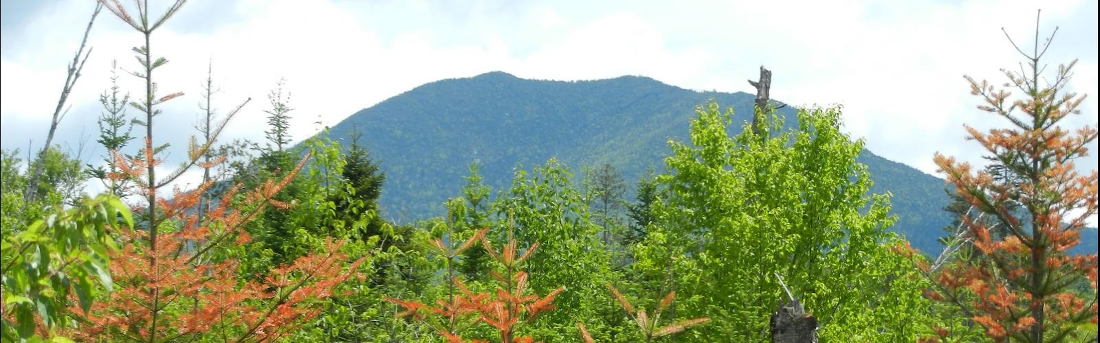 Allen Mountain, New York - Randonnée Pedestre  tree sky outdoor mountain conifer plant nature bushes forest surrounded lush