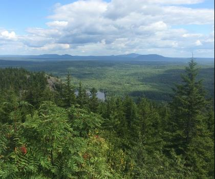Penobscot Mountain, Maine  tree outdoor plant conifer mountain forest wooded