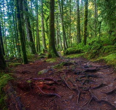 Sunshine Coast Trail photo